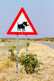 Road sign warning of warthogs Royalty Free Stock Image