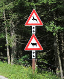 Road signs near the forest attention crossing animals cow and de. Two road signs near the forest attention crossing animals cow and deer stock photos