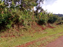 Road site at Arokwo village near Kapchorwa Town, Eastern Uganda. royalty free stock photo