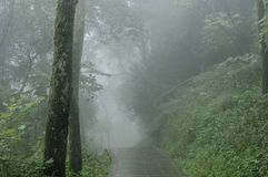 Road in fog. Slabstone road in forest in morning with dense fog Stock Photo