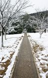 Road in snow. The road in the snow Stock Photography