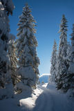 Road in snow covered forest Stock Photography