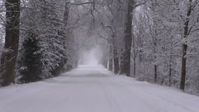 Road between snow covered old trees stock video