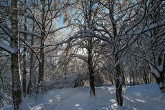 Snow-covered park Stock Photography