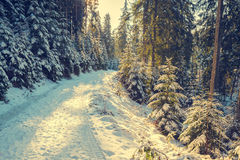 Road between snow covered pine trees Stock Photo