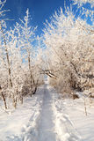 Road in the snow covered walley against blue sky Stock Image