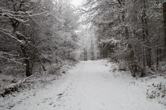 Road in the snow in forest Stock Photography