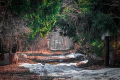 Road in the snow in the mystical spring forest stock images