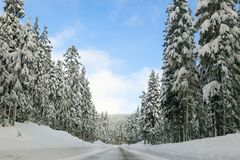 A road in the snow. A point of view shot of driving on a snow covered street at Mt. Hood, Oregon.  Pine trees covered in snow reach tall into the sky Stock Images