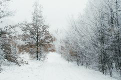 Road in winter forest clearing royalty free stock photos