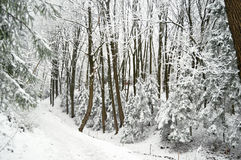 Road at snowbound winter forest in overcast. Beautiful winter landscape Royalty Free Stock Photos