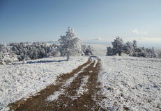 Road,snowcowered grassland and trees stock photos