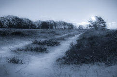 Road into snowy field with distant trees Stock Photography