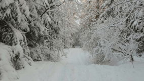Road in a snowy forest stock video footage