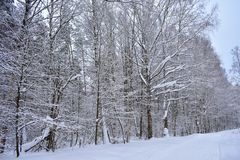 The road through the snowy forest became beautiful after severe frosts, fierce snowstorms. Ice-bound winter forest stock photo