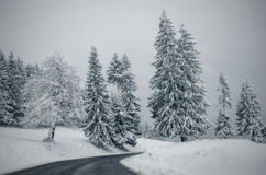 Road through snowy forest Stock Image