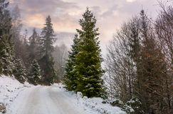 Road through snowy forest on foggy morning. Beautiful nature scenery in winter Royalty Free Stock Photography