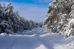 Road in a snowy forest. royalty free stock photo