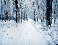 Road in a snowy forest Royalty Free Stock Photo