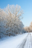Road through snowy wood in wintertime Stock Photos