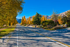 A Road South of Te Anau Royalty Free Stock Image