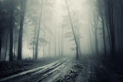 Road through a spooky forest with dark fog. In autumn royalty free stock photo