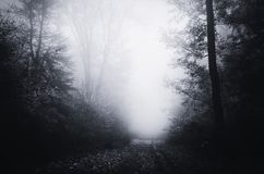 Road through spooky haunted forest with blue fog. Road through spooky haunted forest with fog. Dark woods path. Mysterious dark haunted Halloween forest with royalty free stock photography
