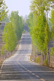 Road in spring Stock Photography