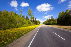 The road in the spring. The asphalted road to a spring season. along the road dandelions grow Stock Images
