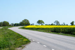 Road in a spring colored landscape Royalty Free Stock Photos
