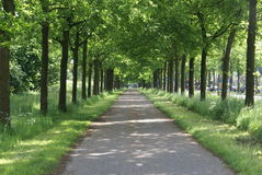 Road in the spring. A road covert in shadow by tree's Stock Image