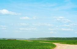 Road through a spring field Stock Photography