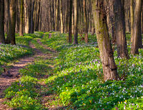 Road in spring forest Stock Photos
