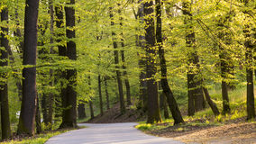 Road in spring forest Stock Image