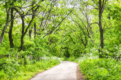 Road in the spring forest. Concept of eco-tourism. The road in the spring forest Royalty Free Stock Images