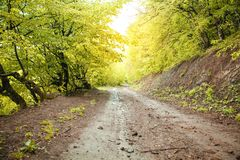 The road in the spring forest with leaves of trees royalty free stock photo