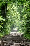 The road in spring forest Royalty Free Stock Images