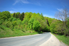 Road in spring forest Stock Photo