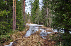 Road in spring  forest Royalty Free Stock Photo