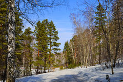 A road in the spring forest. Stock Image