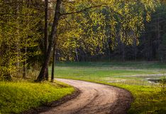 The road in the spring forest Stock Image