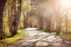 Road in spring morning Royalty Free Stock Images