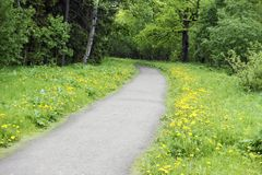 The road in the spring park.  royalty free stock photo