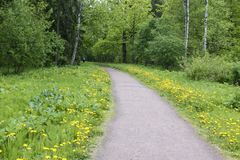 The road in the spring park.  royalty free stock photos