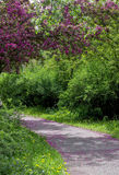 A road in a spring park Royalty Free Stock Photography