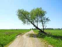 Road and spring tree, Lithuania Royalty Free Stock Photography