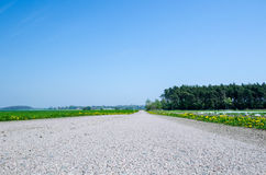 Road at springtime Royalty Free Stock Photos