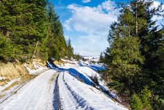 Road through spruce forest in winter. Lovely countryside on a sunny and frosty day Royalty Free Stock Photography