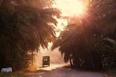 Road on Sri Lanka Stock Images
