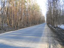 Road in start of spring in sunny day with high trees and shadows. Road in start of spring in sunny day with high trees on the sides and falling long shadows royalty free stock photos